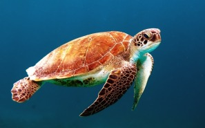 turtle-863336_1280