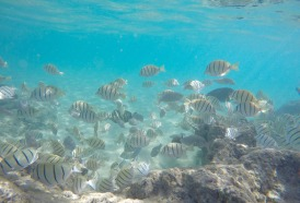 underwater-fish-1686604_1920